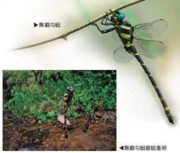 昆虫电子小报边框
